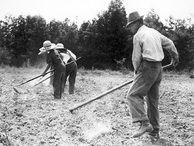 Old photograph of weed control