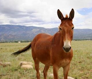 kisah keledai umar membunuh orang syi'ah