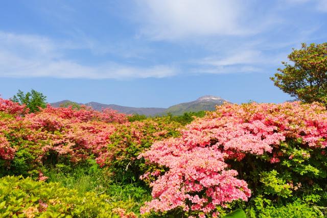 那須高原・八幡つつじ群落と那須岳