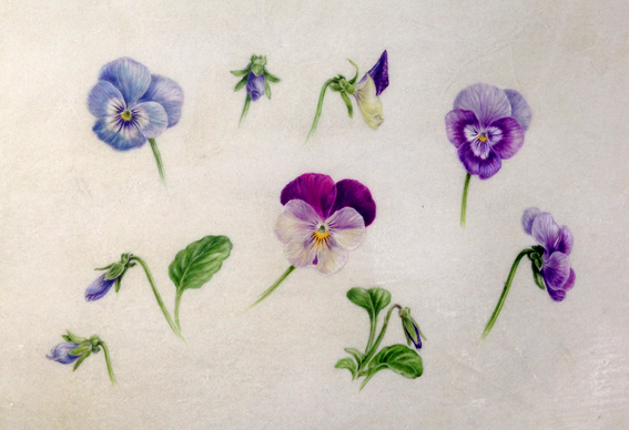 winter pansies painted on vellum