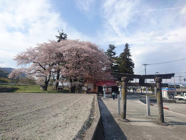 わに塚のサクラ 諏訪神社 広神社