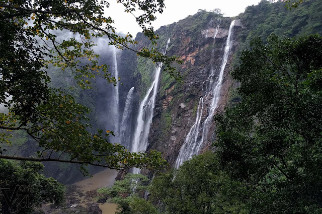 Jog falls as seen from behind the trees