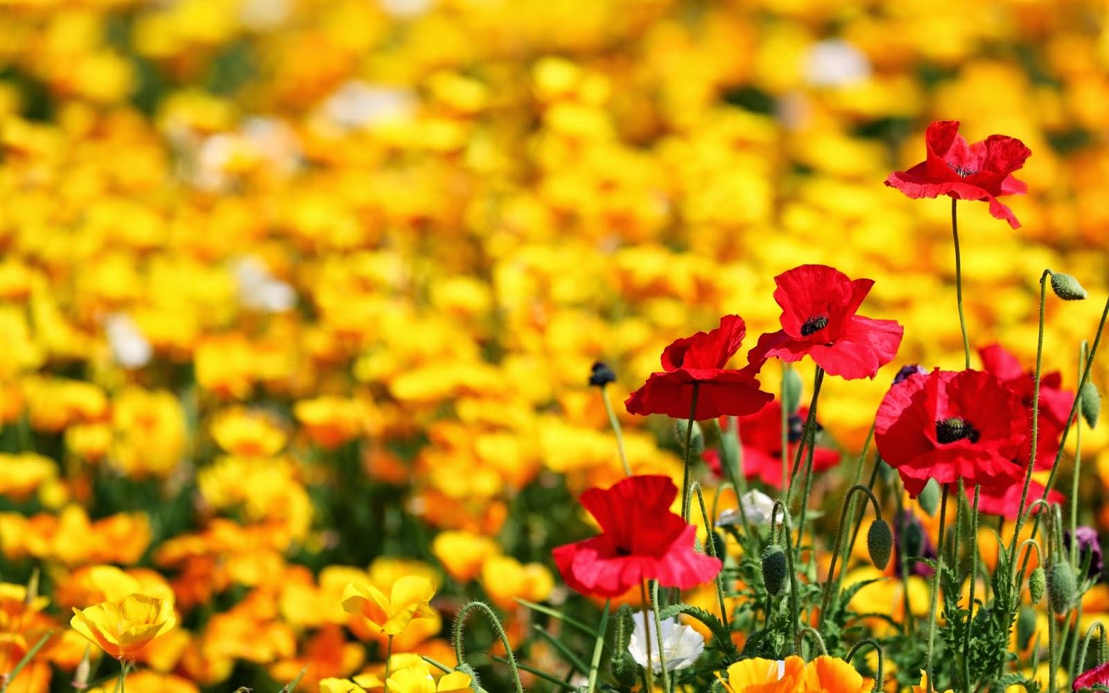 En güzel çiçek resmi facebook