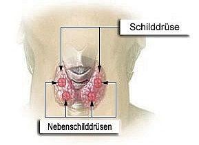 osteoporose handeln bevor der knochen bricht osteoporose durch