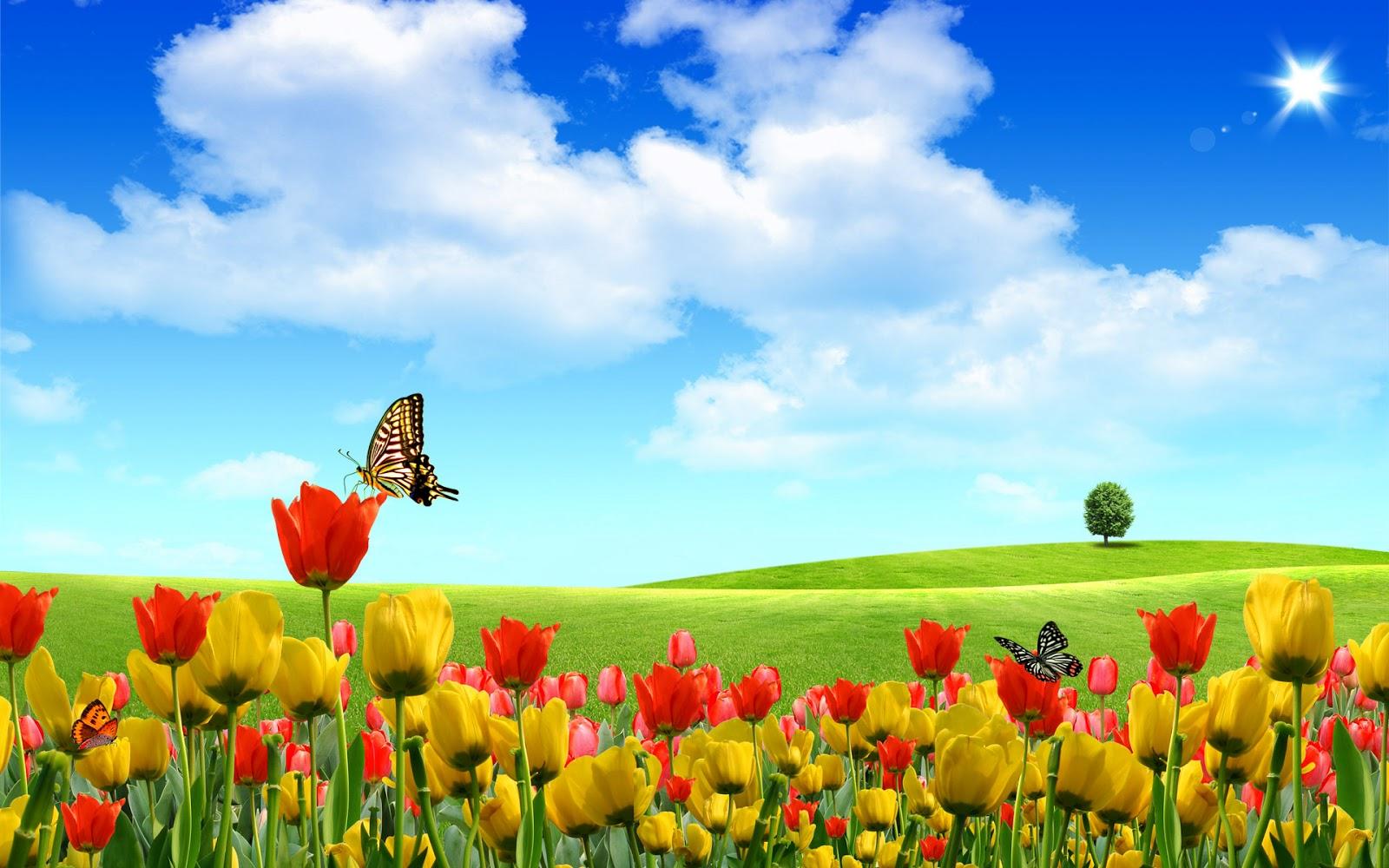 Fondo Pantalla Paisajes Animados Tulipanes Imagenes Hilandy