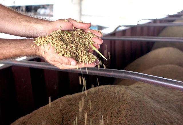 Fedeagro advierte de emergencia agroalimentaria en Venezuela