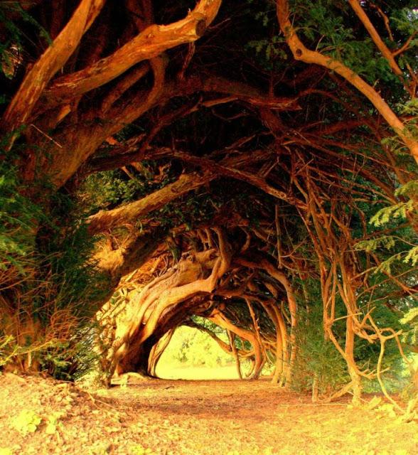 Outro belo caminho pelo qual caminhar sentindo a natureza e a tranquilidade