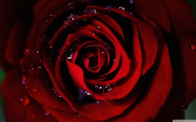 Eye of a Gothic Rose