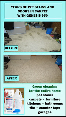 Best Pet Stain Remover For Carpet And Pet Odor Eliminator ...