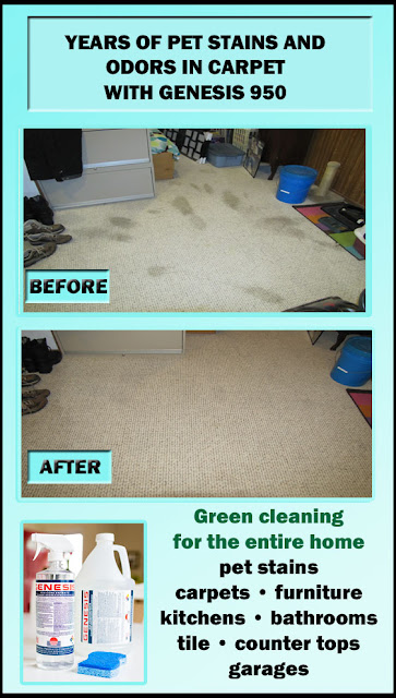 Best Pet Stain Remover For Carpet And Pet Odor Eliminator: Genesis 950 Cleaner