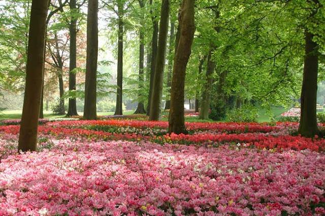 Floralia Bruxelles