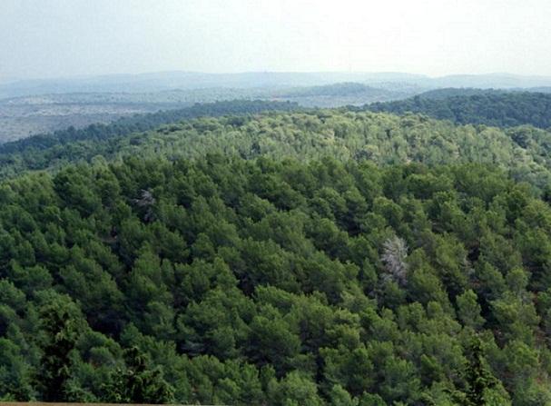 hutan.jpg (607×447)