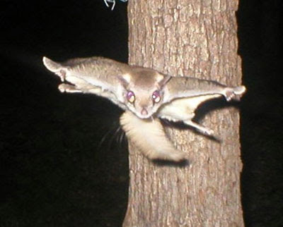 facebooking from the edge...: When squirrels go rogue...