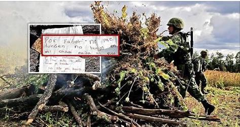 Campesino ruega a militares no tumbarle su cultivo de Amapola