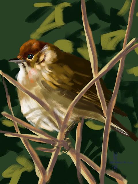 Blackcap Bird painting by Artmagenta