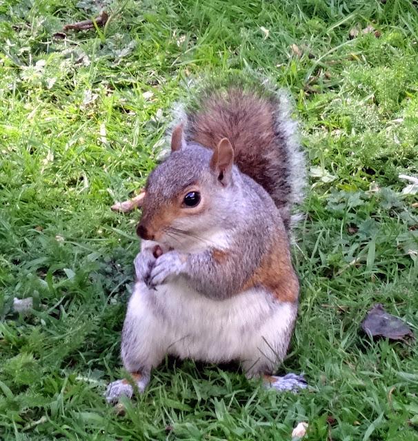 squirrels in Golders Hill Park