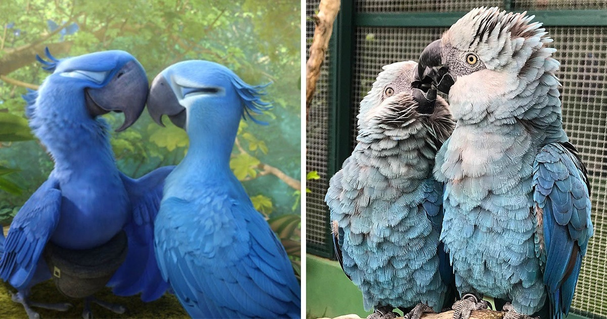 Heartbreaking News: The Blue Parrot From 'Rio' Movie Is Now Extinct
