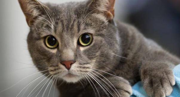 Βρετανός πέθανε από λύσσα όταν τον δάγκωσε γάτα στο Μαρόκο