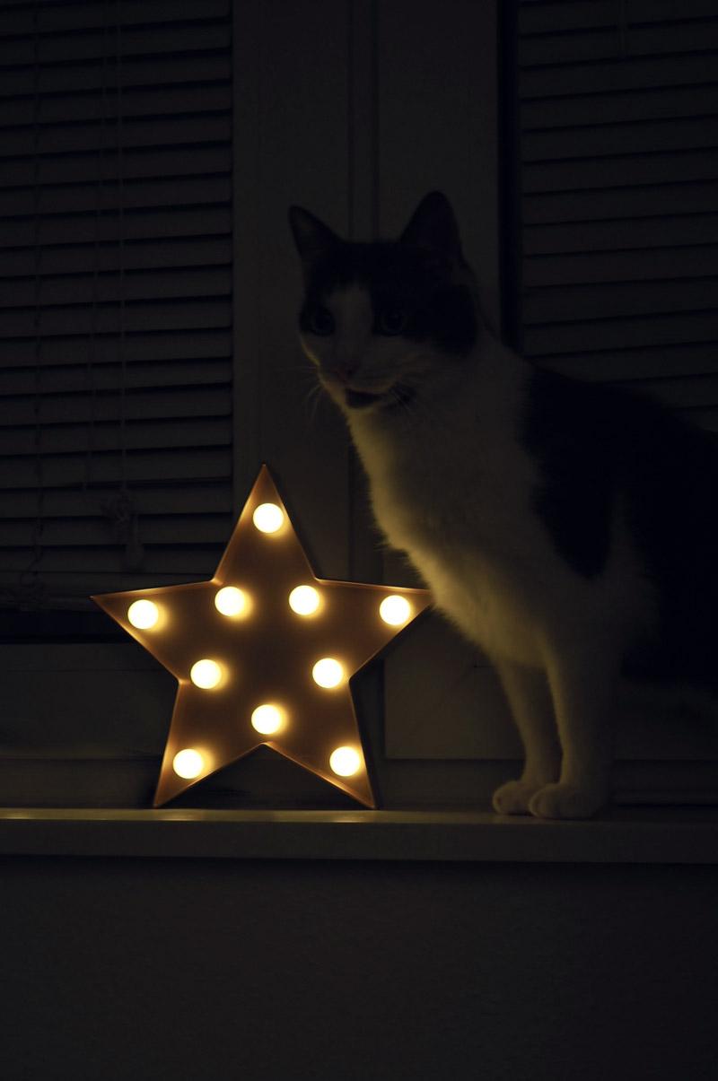 LED-Leuchtstern mit Kater Mero