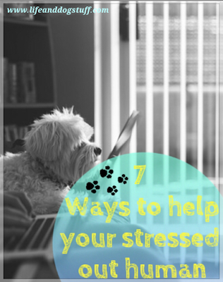 7 Ways Dogs Can Help Their Stressed Out Human