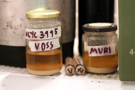 Jars and tubes of Voss and Muri kveik brought back from Norway.