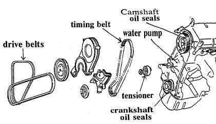Drive Belts and Oil Seals
