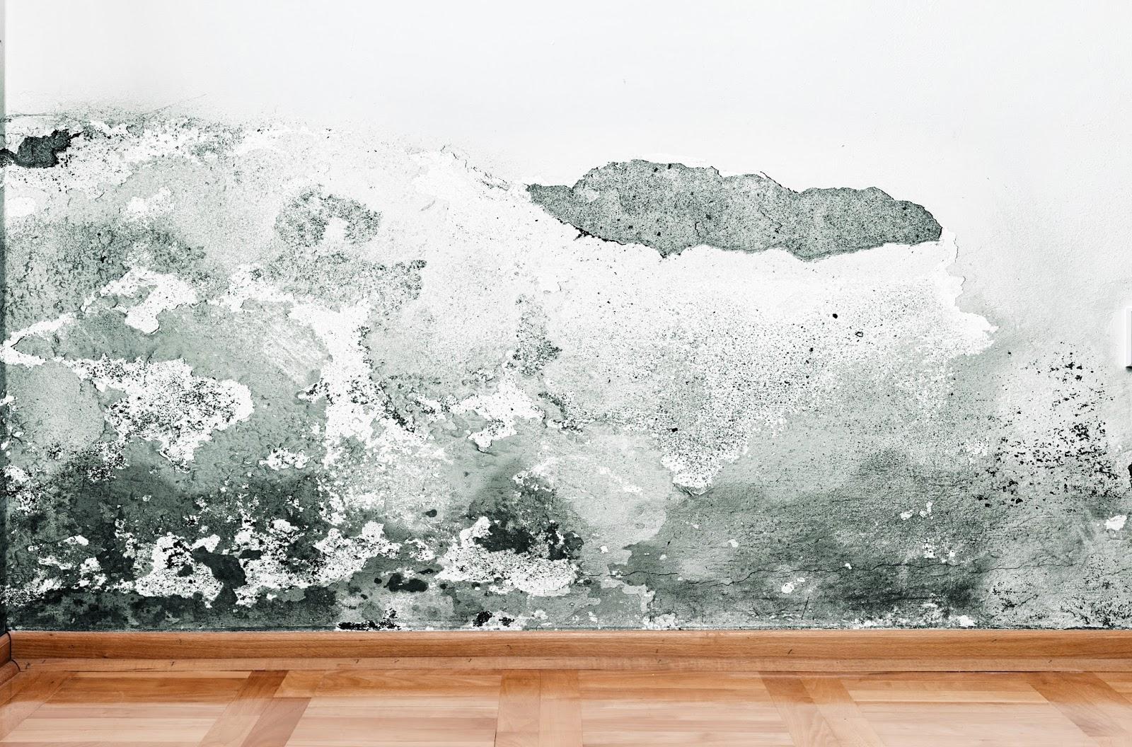 Quitar la humedad de las paredes - Quitar humedad pared ...