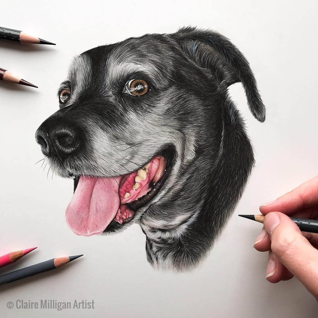 10-Smiley-Forest-Claire-Milligan-Realistic-Color-Pencil-Animal-Portraits-www-designstack-co