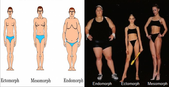 Male Body Types Ectomorph Mesomorph Endomorph Oh Man Awake