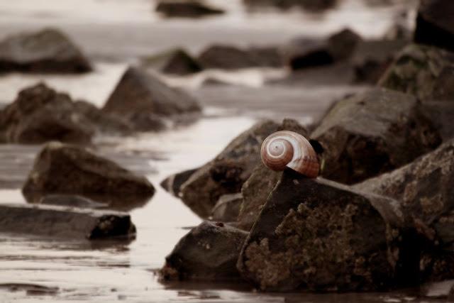 El plástico también alcanza a los moluscos y los deja sin blindaje ante depredadores