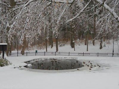 święta w Muszynie, wycieczka do Krynicy, Góra Parkowa, atrakcje w Krynicy, pamiątki z Krynicy