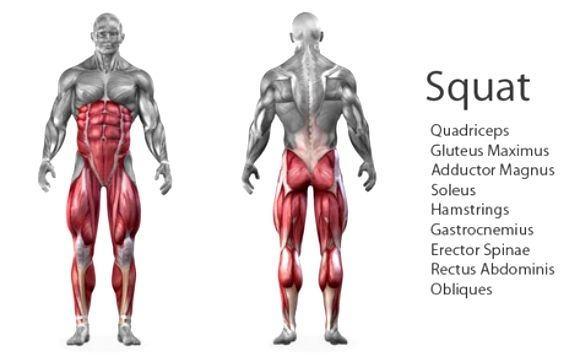 Які м'язи тіла навантажуються під час присідань
