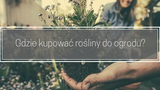 Gdzie kupować rośliny do ogrodu?