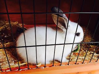 Cara merawat kelinci dengan benar