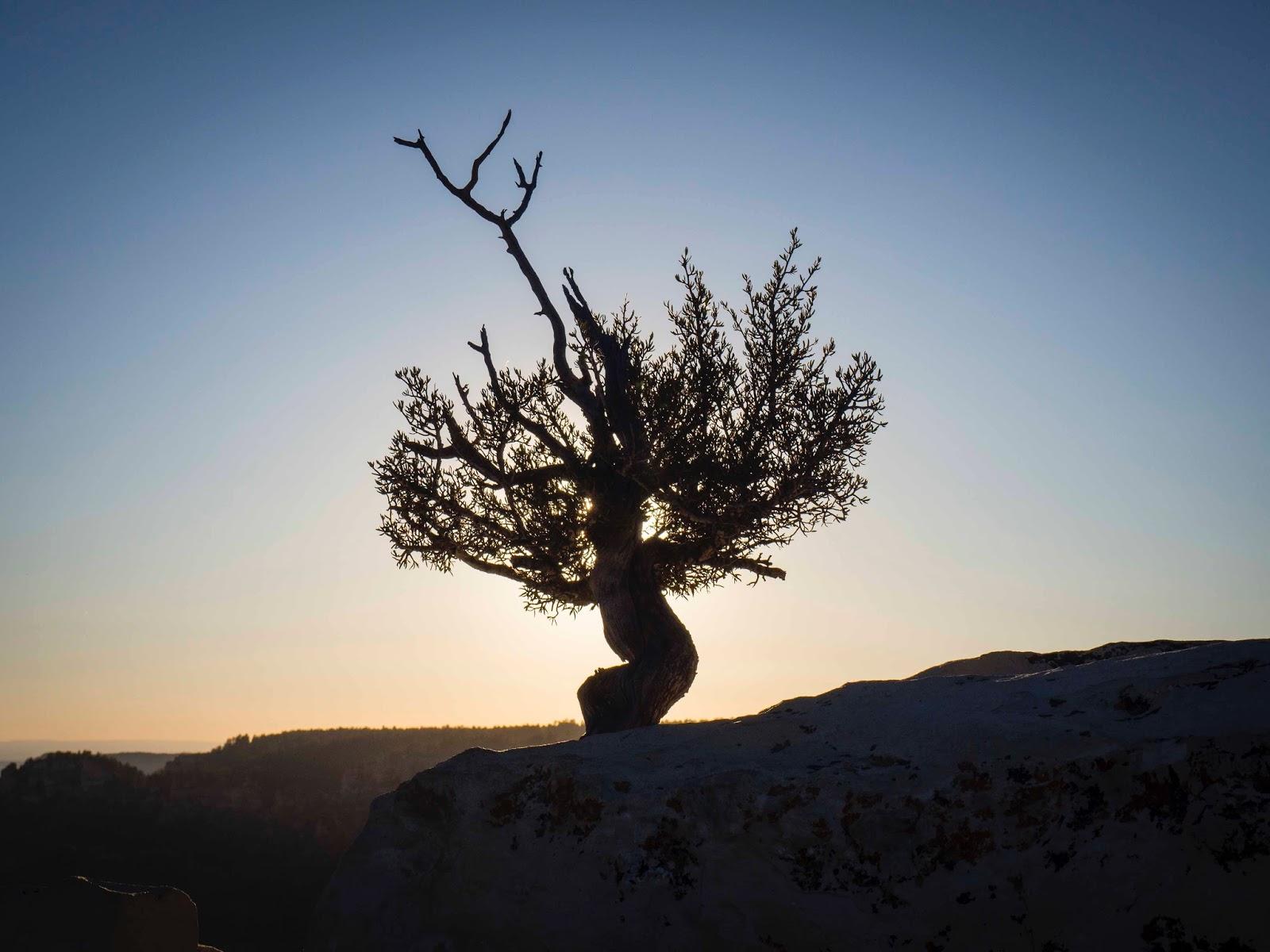 Árvora na montanha nevada, contraluz, assemelhada a uma antena telescópica: ilustra a seção a respeito dos textos das linhas de ''Chien / Desenvolvimento (Progresso Gradual)'', um dos 64 hexagramas do I Ching, o Livro das Mutações