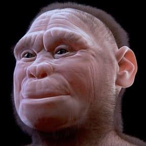 Reconstrucción de Homo floresiensis
