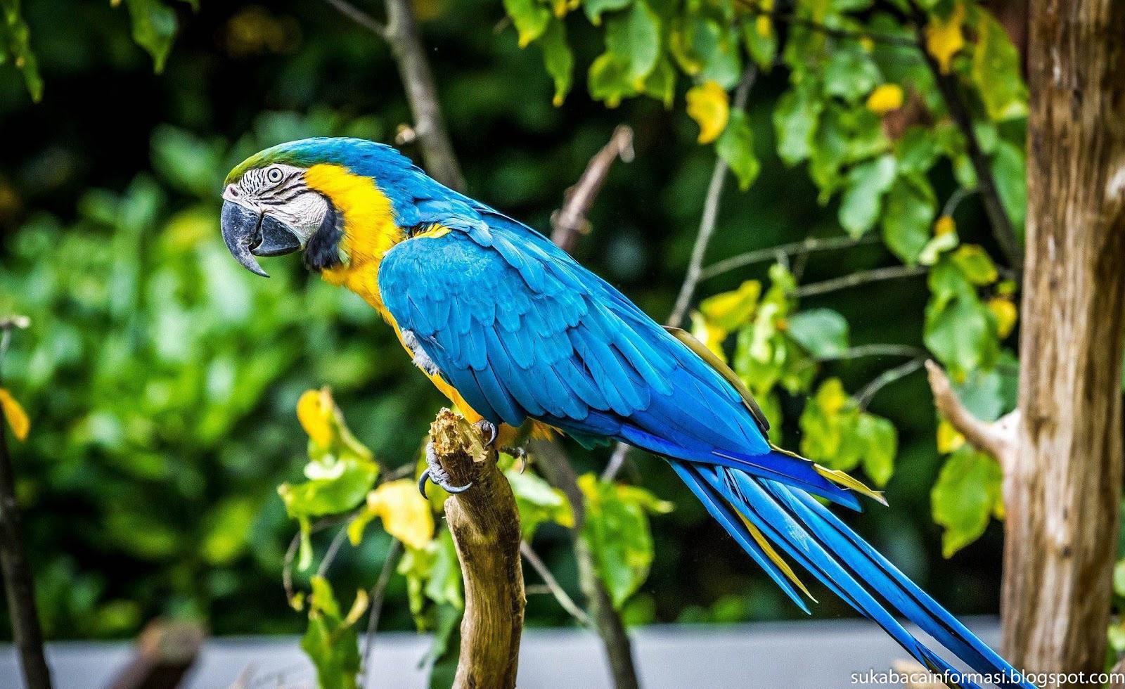 Blue Parrot wallpaper pack