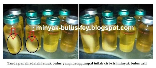 berjuta khasiat dan manfaat minyak bulus asli kalimantan