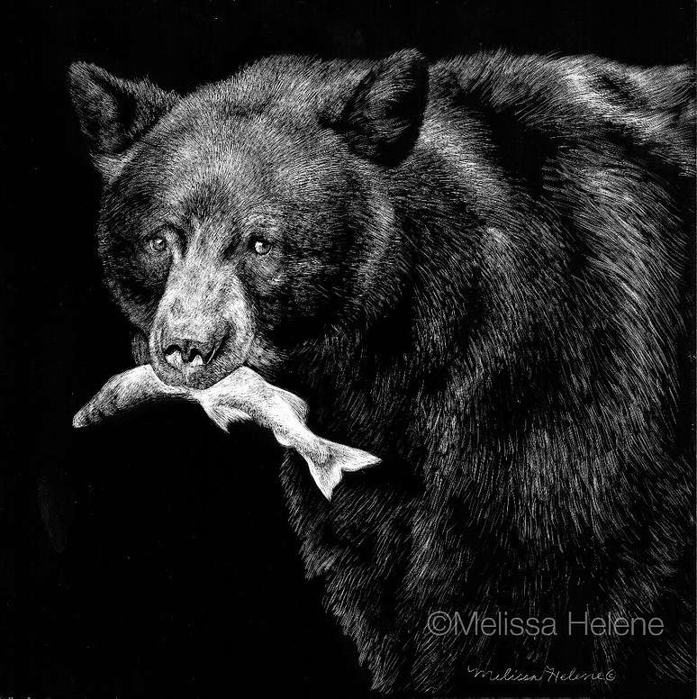 13-Black-Bear-Melissa-Helene-Amazing-Expressions-in-Scratchboard-Animal-Portraits-www-designstack-co