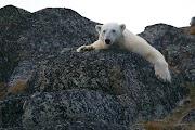 All Polar Bears Are Left-Handed