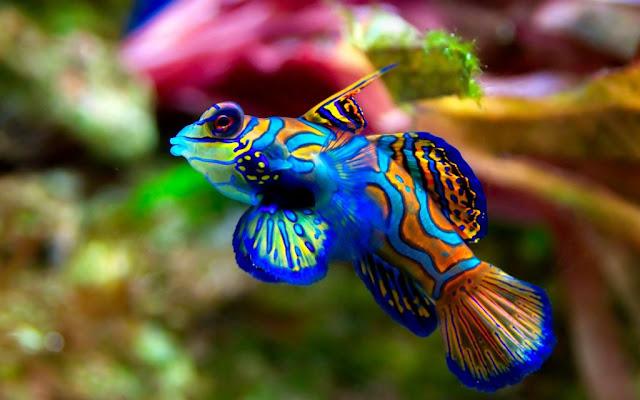 أحدث صور الأسماك الملونة تحميل مجاني HD خلفيات