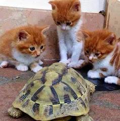 smiješna slika: mačići s kornjačom