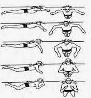 Pengertian Renang gaya dada