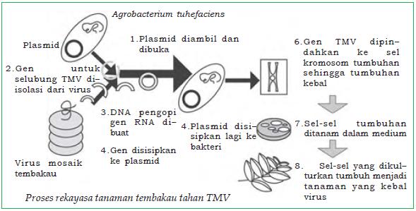 Bioteknologi Dalam Bidang Pertanian Pangan Pertambangan Gas Bio Kesehatan Masalah Sampah Dan Pembuatan Pst Scp