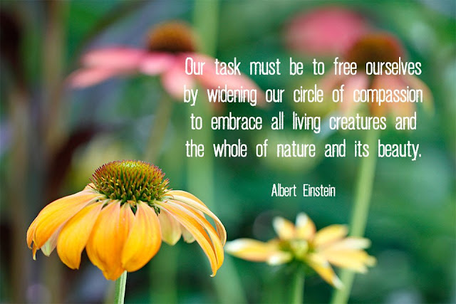 Nature Quote - Nature Compassion Beauty - Albert Einstein