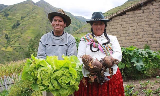 Mi Agro otorgará créditos directos a agricultores