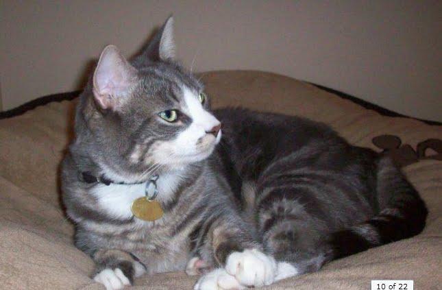 Boy cat names grey tabby
