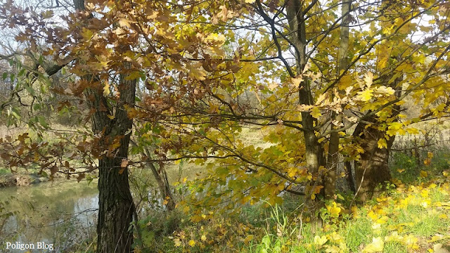 Małopolska, Skawina, park, jesień, Skawinka