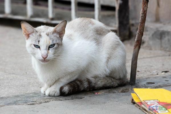Havana cats photos