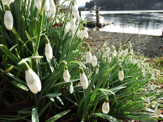 from snow to snowdrops